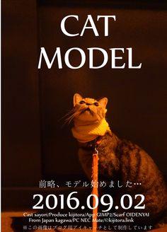 サヨリちゃん「猫用マフラー」モデルデビューか?