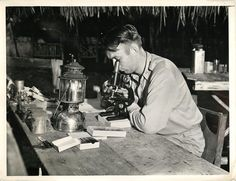 1943- U.S. soldier examines slides for malaria germs at the jungle headquarters of the 4th Malaria Survey Unit in New Guinea.