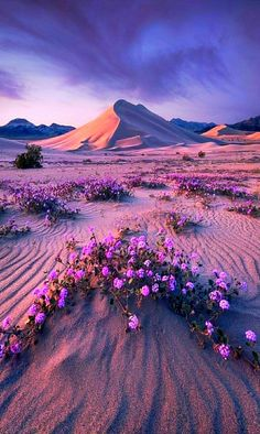 Flowers in the Sand A Nature Story