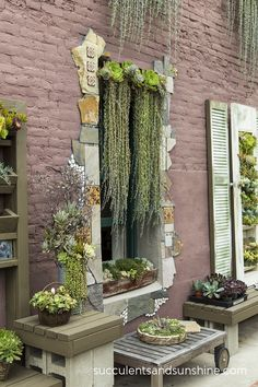 Hanging succulents over a window at the Succulent Cafe in Oceanside - www.succulentsandsunshine.com