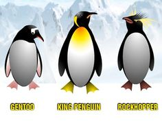 Just a few types of penguins . . . More