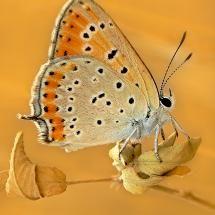Butterflies @ Pixdaus