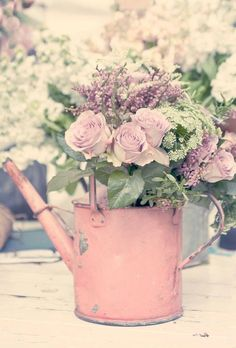 Roses in old pink watering can