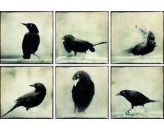 8x8 Black and White Photography Set, Halloween Photos, Raven Art, Goth Photo Prints, Raven Photography, Gothic Decor, Spooky Art
