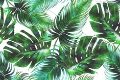 Summer tropical patterns are very well known templates.There aremany different kinds of summer collection tropical pattern templates & themes Tropical Background, Leaf Background, Background Patterns, Garden Illustration, Watercolor Illustration, Watercolor Succulents, Watercolor Leaves, Watercolor Background, Tropical Pattern