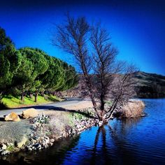 Where in Vacaville can you run on a trail along the water? Lagoon Valley Park, that's where!
