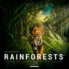 """""""Destroying rainforest for economic gain is like burning a Renaissance painting to cook a meal."""" - E.O. Wilson #quote"""
