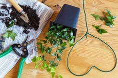 brectan1 Indoor Flowers, Plant Nursery, Compost, Pesto, House Plants, Ethnic Recipes, Diy, Gardening, Small Gardens