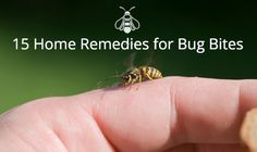 15 Cheap and Easy Home Remedies to Ease Insect Bites and Stings