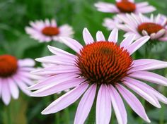 When and How to Divide Common Perennials   My Soulful Home