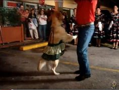 This dancing dog video will make you smile! Such a great dancer she is -- I want to teach my dog to do this!
