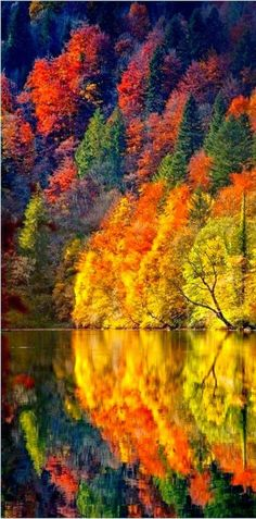 Fire in the Woods ~ an Autumn reflection