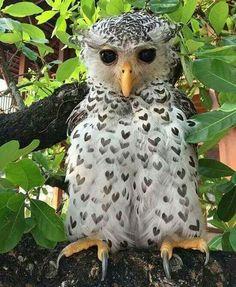 Essa coruja é cheia de corações em seu corpo ❤️