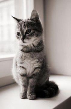 Gracious Grey Kitty