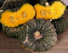 IRONbark pumpkin