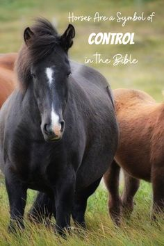 When we look at the horses of men and the horses of God in the Bible, we can see that horses are a symbol of control. Bible Preaching, Animal Symbolism, Christian Post, Christians, Word Of God, Blogging, Symbols, Horses, Times