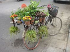 Bicycle covered in flowers parked in side street, Hanoi, Vietnam