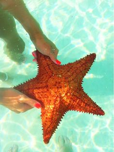 I actually just held a starfish yesterday Coral, Orange And Turquoise, Fishing In The Bahamas, Summer Fun, Summer Time, Most Luxurious Hotels, Beach Color, Nautical Fashion, Starfish