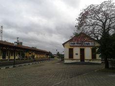 Ipê roxo na antiga estação de trem