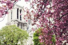 Spring in Paris by Paris in Four Months