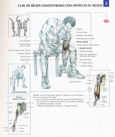Cuando se habla de bíceps se tiene que hablar de Arnold. Pero en esta ocasión no hablaremos de él sino, de los 5 mejores ejercicios d...