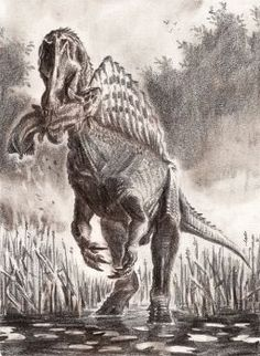 Want to discover art related to spinosaurus? Check out inspiring examples of spinosaurus artwork on DeviantArt, and get inspired by our community of talented artists. Dinosaur Sketch, Dinosaur Art, Prehistoric World, Prehistoric Creatures, Spinosaurus Aegyptiacus, Godzilla, All Dinosaurs, Dragon City, Jurassic Park World