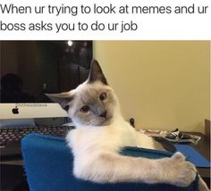 Sir, This Is My Job