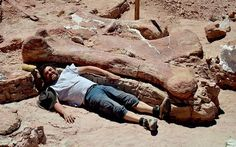 'World's largest dinosaur' discovered in Argentina - The largest creature to have ever walked the earth - a dinosaur measuring 130 feet and weighing 77 tonnes -