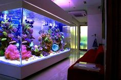 14 Awesome Aquarium Furniture Idea to Design Your Home - futurisme Marine Aquarium, Reef Aquarium, Aquarium Fish Tank, Aquarium House, Aquarium Stand, Cool Fish Tanks, Saltwater Fish Tanks, Awesome Tanks, Tropical Fish Tanks
