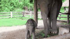 Ten chętni słonia, który po prostu chce się przywitać tak źle. | 22 Photos That…