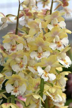 flowersgardenlove: Newly-bloomed Spring Beautiful gorgeous pretty flowers