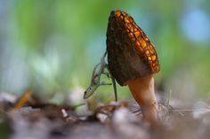 Vadim Trunov, a self-taught nature photographer based in Voronezh, Russia, takes beautiful macro photos of snails, insects and mushrooms that seem to personify them and weave beautiful little stories around these oft-overlooked creatures' lives. Photographie Macro Nature, Amazing Photography, Nature Photography, Fotografia Macro, Animal Magnetism, Rare Animals, Woodland Creatures, Bored Panda, Beautiful World