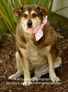 Meet Keisha; her owner returned her to the shelter where the dog originally was adopted.