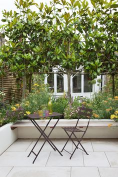 A London courtyard garden designed by Joanna Archer. Pleached Magnolia trees. Soft perennial planting. Photography copyright Annaick Guitteny.