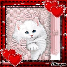 Good Morning Happy Saturday, Good Morning Gif, Valentines Gif, Happy Valentines Day, Beautiful Gif, Animals Beautiful, Cute Cats And Kittens, Kittens Cutest, Kitten Wallpaper