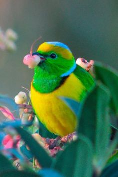 Bird like rainbow