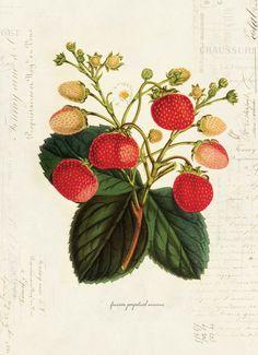 (I agree!) just love botanical drawings