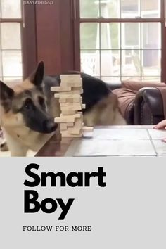 Smart Boy, Training Your Dog, Boys, Animals, Baby Boys, Animales, Animaux, Animal, Senior Boys