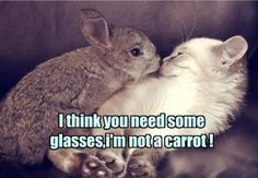 28 Funny Animal Pictures