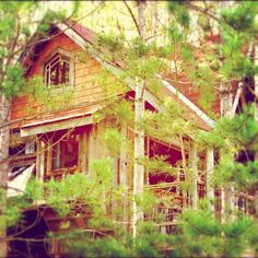Taking one last look at the #Treehouse before the cold weather hits.Then snow eeeeek.*waiting for spring already*