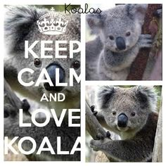 Keep calm and love koalas