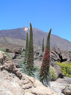 Flora, Desert Landscape, Canario, Canary Islands, Buildings, Places To Visit, Sky, Mountains, Water