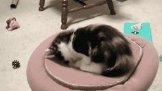 How many cats?    (GIFAnime)