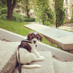 heididahlsveen:  #Saturday evening was a bit #boring #atsjoo #puppy #valp #hund #dog #mixed