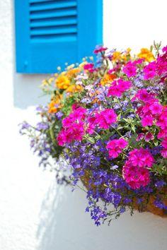 fensterladen blau balkon bepflanzen blumenkasten frisch