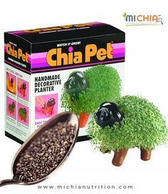 Chia Nutrition, Chia Seeds, Health, Food, Health Care, Meals, Salud, Yemek, Eten