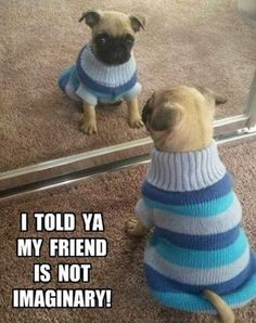 39 Pretty Hilarious Animal Pictures