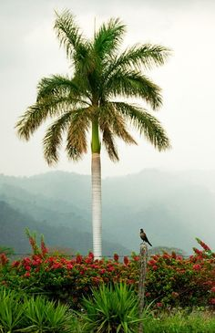 #PinUpLive >>> Beautiful scene - palm trees never get old!