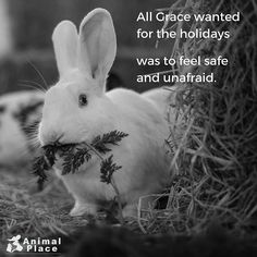 When Grace, Tinsel, Jingle, Snowball, and Yuki arrived at Animal Place in December of 2014, their holiday wish was granted. They had escaped cruel and unnecessary testing at a research laboratory.⠀ ⠀ Grant more bunnies' wishes - buy cruelty free cosmetics, household cleaners, and hair care products. ⠀ ⠀ Photo: @marjib ⠀ -⠀ -⠀ -⠀ -⠀ -⠀ #crueltyfree #bunny #rabbit #holidaywishes #alliwantforchristmas #vegan #vegansofig #vegansofinstagram #animaltesting #love #animalplace