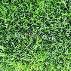 Kids have a love affair with grass stains. Beat the stains and learn some of these grass stain home remedies. How To Remove Grass, Lawn Turf, Homemade Paint, Grass Stains, Photography Backdrops, Newborn Photography, Photo Studio, Home Remedies, Helpful Hints